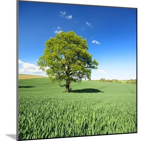 Single Oak in Grain Field in Spring, Back Light, Burgenlandkreis, Saxony-Anhalt, Germany-Andreas Vitting-Mounted Photographic Print