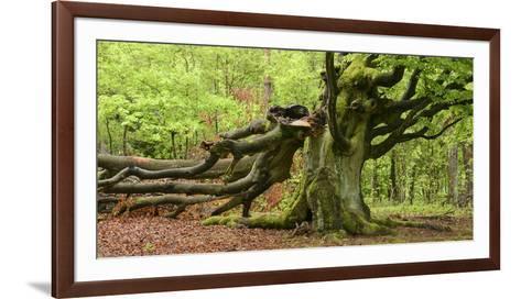 Germany, Hesse, Kellerwald-Edersee National Park, Bad Wildungen (Small Town), Halloh-Wald-Andreas Keil-Framed Art Print