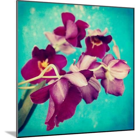 Portrait of Purple Miltonia Orchid on Turqoise Background-Alaya Gadeh-Mounted Photographic Print