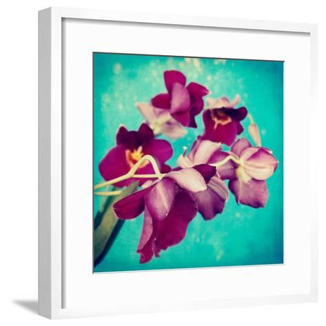Portrait of Purple Miltonia Orchid on Turqoise Background-Alaya Gadeh-Framed Art Print