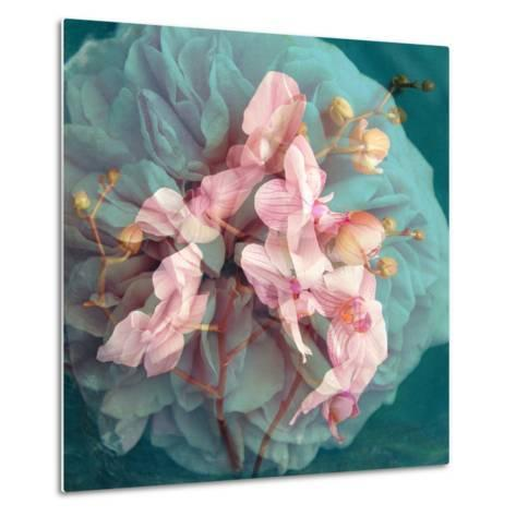 A Delicate Floral Montage from Blooming Orchids and Rose-Alaya Gadeh-Metal Print