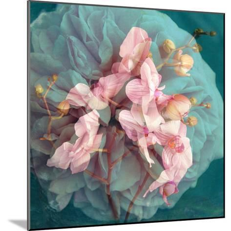 A Delicate Floral Montage from Blooming Orchids and Rose-Alaya Gadeh-Mounted Photographic Print