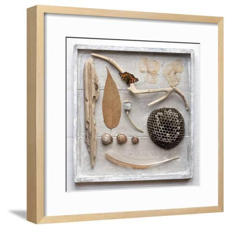 Still Life, Frame, Collection, Natural Materials-Andrea Haase-Framed Art Print