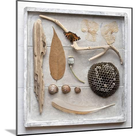 Still Life, Frame, Collection, Natural Materials-Andrea Haase-Mounted Photographic Print