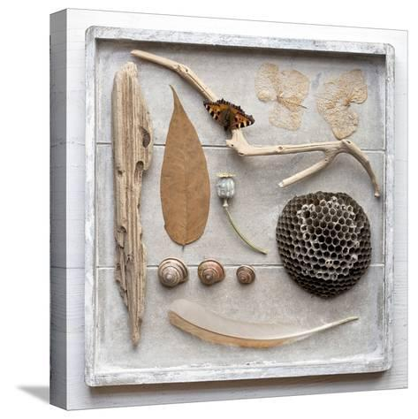 Still Life, Frame, Collection, Natural Materials-Andrea Haase-Stretched Canvas Print