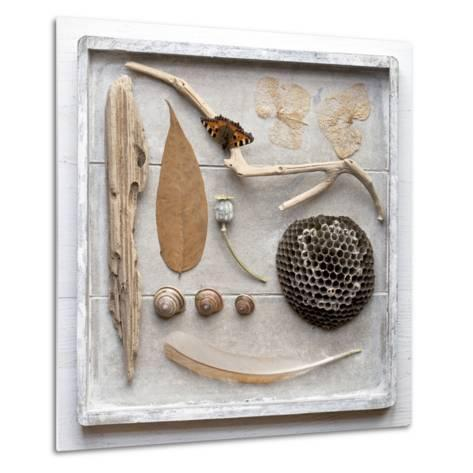 Still Life, Frame, Collection, Natural Materials-Andrea Haase-Metal Print
