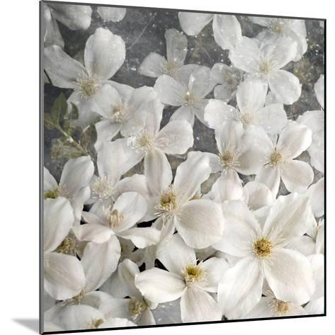 A Floral Montage from Clematis and Texture-Alaya Gadeh-Mounted Photographic Print