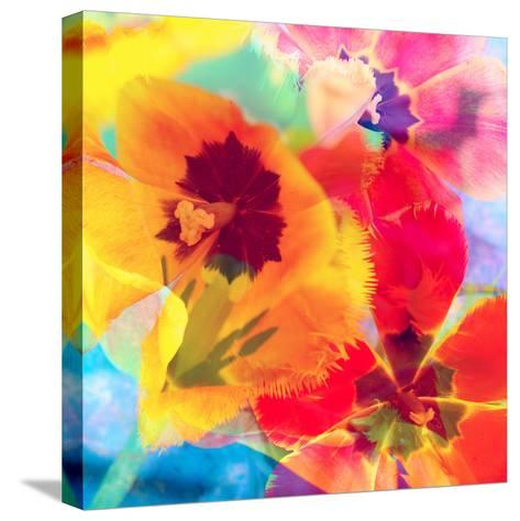 Dreamy Photographic Layer Work from Tulips-Alaya Gadeh-Stretched Canvas Print