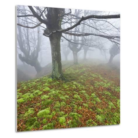 Beech Forest in the Gorbea Nature Reserve, Fog, Moss, Basque Country, Spain-Rainer Mirau-Metal Print
