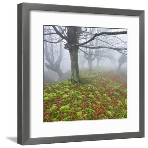 Beech Forest in the Gorbea Nature Reserve, Fog, Moss, Basque Country, Spain-Rainer Mirau-Framed Art Print