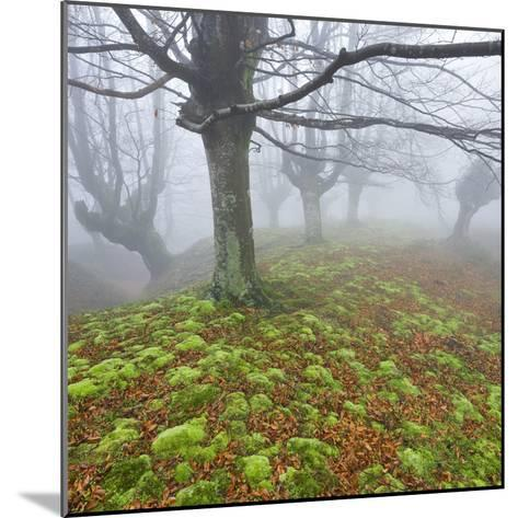 Beech Forest in the Gorbea Nature Reserve, Fog, Moss, Basque Country, Spain-Rainer Mirau-Mounted Photographic Print