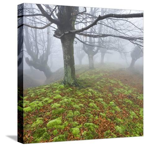 Beech Forest in the Gorbea Nature Reserve, Fog, Moss, Basque Country, Spain-Rainer Mirau-Stretched Canvas Print