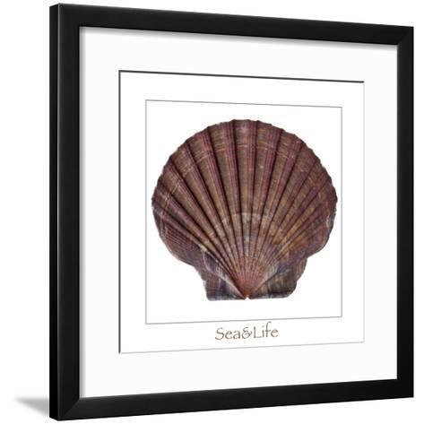 Maritime Still Life with Scallop-Uwe Merkel-Framed Art Print