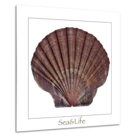 Maritime Still Life with Scallop-Uwe Merkel-Metal Print