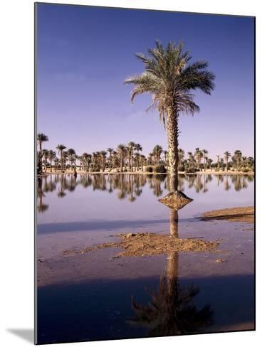 North Africa, Algeria, Sahara, Oasis, Date Palms-Thonig-Mounted Photographic Print