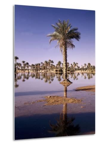 North Africa, Algeria, Sahara, Oasis, Date Palms-Thonig-Metal Print