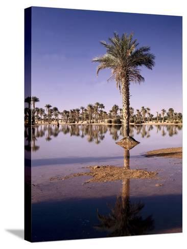North Africa, Algeria, Sahara, Oasis, Date Palms-Thonig-Stretched Canvas Print