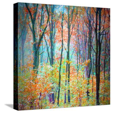 An Abstract Multicolorl Montage from the Forest, Photographic Layer Work-Alaya Gadeh-Stretched Canvas Print