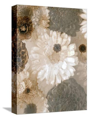Photographic Layer Work from White and Brown Blossoms-Alaya Gadeh-Stretched Canvas Print