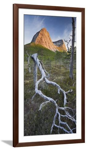 Norway, Nordland, Lofoten, Ballangen, Saetran, Efjorden, Stortindan, Dead Tree-Rainer Mirau-Framed Art Print