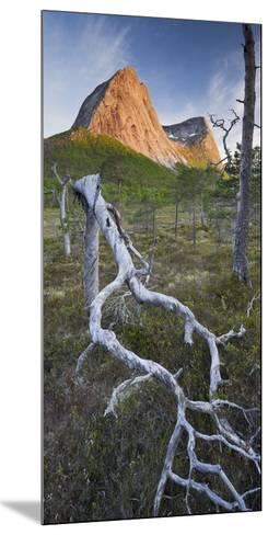 Norway, Nordland, Lofoten, Ballangen, Saetran, Efjorden, Stortindan, Dead Tree-Rainer Mirau-Mounted Photographic Print