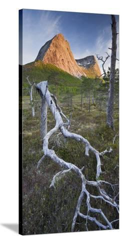 Norway, Nordland, Lofoten, Ballangen, Saetran, Efjorden, Stortindan, Dead Tree-Rainer Mirau-Stretched Canvas Print