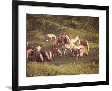 Horses, Haflinger, Meadow-Thonig-Framed Art Print