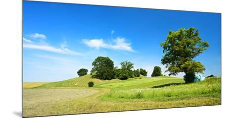 Cultivated Landscape with 'SolitŠr Eiche' (Oak), Agriculturally Extensively Used Meadows, Bavaria-Andreas Vitting-Mounted Photographic Print