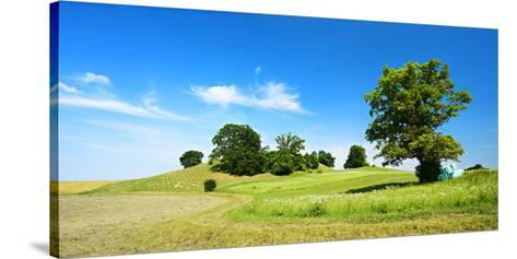Cultivated Landscape with 'SolitŠr Eiche' (Oak), Agriculturally Extensively Used Meadows, Bavaria-Andreas Vitting-Stretched Canvas Print