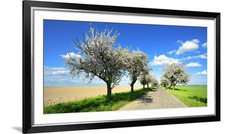 Germany, Saxony-Anhalt, Near Naumburg, Blossoming Cherry Trees at Country Road-Andreas Vitting-Framed Art Print