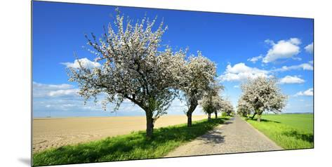Germany, Saxony-Anhalt, Near Naumburg, Blossoming Cherry Trees at Country Road-Andreas Vitting-Mounted Photographic Print