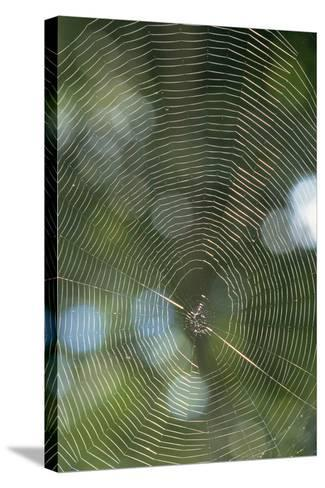 Spider Web-Comstock-Stretched Canvas Print
