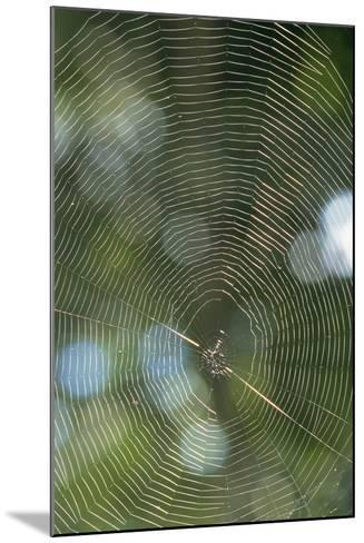 Spider Web-Comstock-Mounted Photographic Print