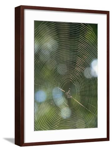 Spider Web-Comstock-Framed Art Print