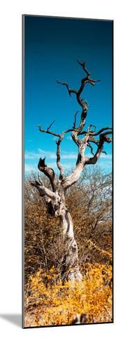 Awesome South Africa Collection Panoramic - Dead Tree II-Philippe Hugonnard-Mounted Photographic Print