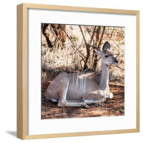 Awesome South Africa Collection Square - Impala Antelope-Philippe Hugonnard-Framed Art Print