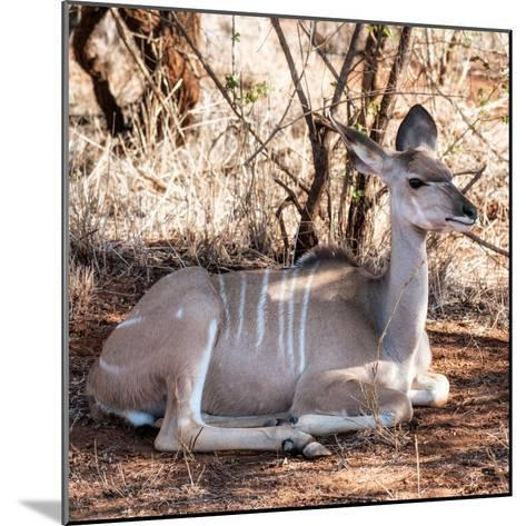 Awesome South Africa Collection Square - Impala Antelope-Philippe Hugonnard-Mounted Photographic Print