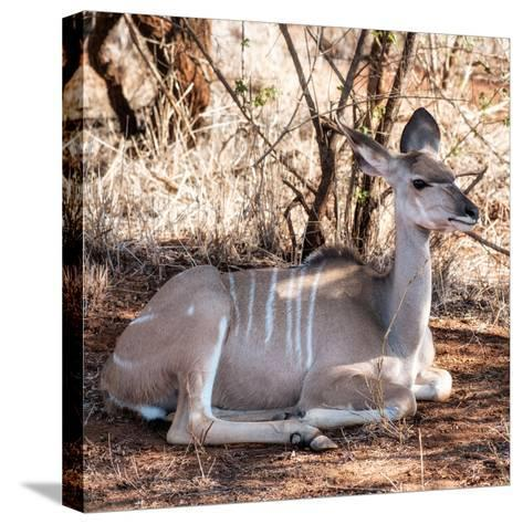 Awesome South Africa Collection Square - Impala Antelope-Philippe Hugonnard-Stretched Canvas Print