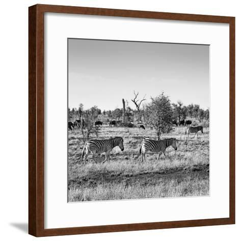 Awesome South Africa Collection Square - Herd of Zebra B&W-Philippe Hugonnard-Framed Art Print