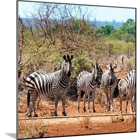 Awesome South Africa Collection Square - Herd of Zebra II-Philippe Hugonnard-Mounted Photographic Print