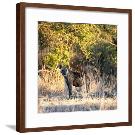 Awesome South Africa Collection Square - Hyena at Sunrise-Philippe Hugonnard-Framed Art Print