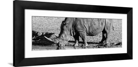 Awesome South Africa Collection Panoramic - Black Rhino B&W III-Philippe Hugonnard-Framed Art Print