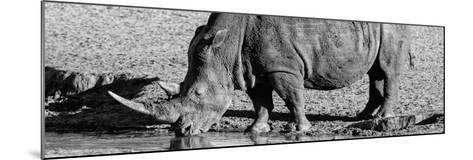 Awesome South Africa Collection Panoramic - Black Rhino B&W III-Philippe Hugonnard-Mounted Photographic Print