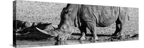 Awesome South Africa Collection Panoramic - Black Rhino B&W III-Philippe Hugonnard-Stretched Canvas Print