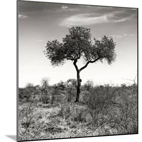 Awesome South Africa Collection Square - One Acacia Tree B&W-Philippe Hugonnard-Mounted Photographic Print
