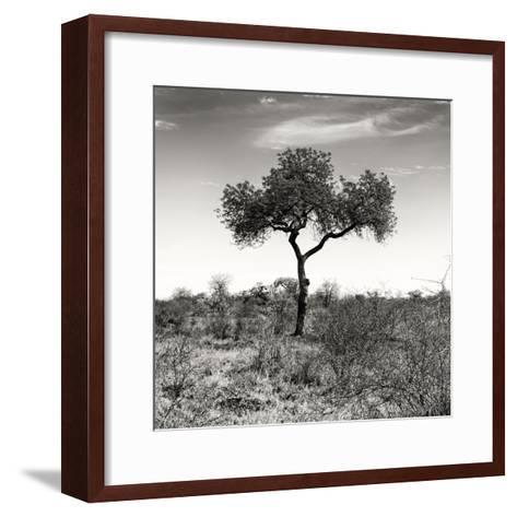Awesome South Africa Collection Square - One Acacia Tree B&W-Philippe Hugonnard-Framed Art Print