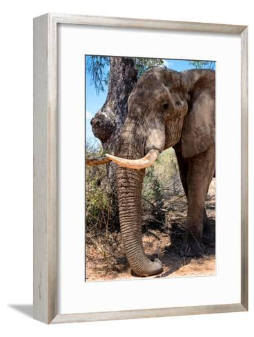 Awesome South Africa Collection - African Elephant V-Philippe Hugonnard-Framed Art Print