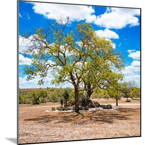 Awesome South Africa Collection Square - African Acacia Tree-Philippe Hugonnard-Mounted Photographic Print