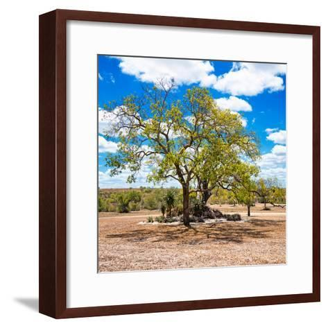 Awesome South Africa Collection Square - African Acacia Tree-Philippe Hugonnard-Framed Art Print