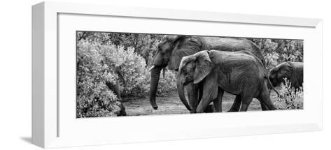Awesome South Africa Collection Panoramic - Elephant Family B&W-Philippe Hugonnard-Framed Art Print